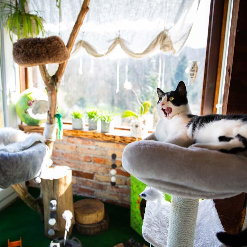 Mačka uživa u VIP zoni
