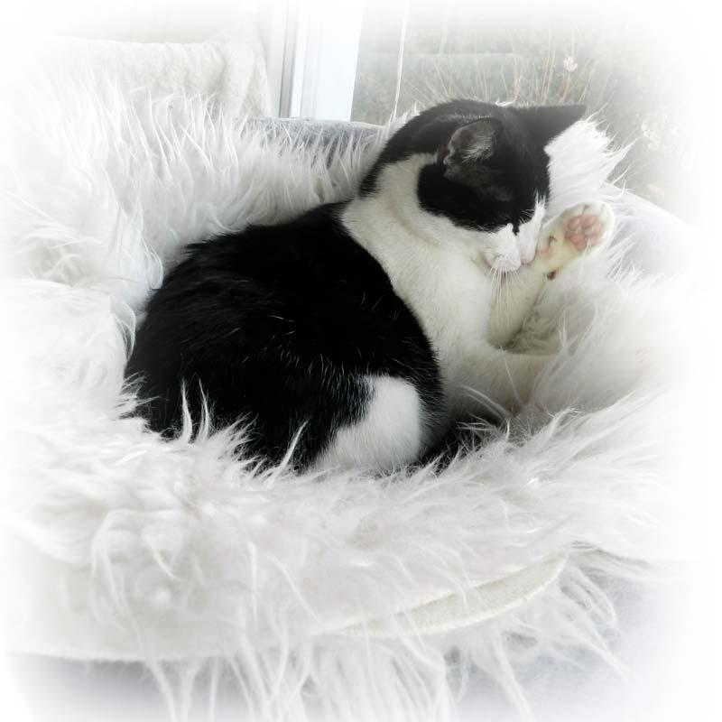 Mačka u udobnom ležaju
