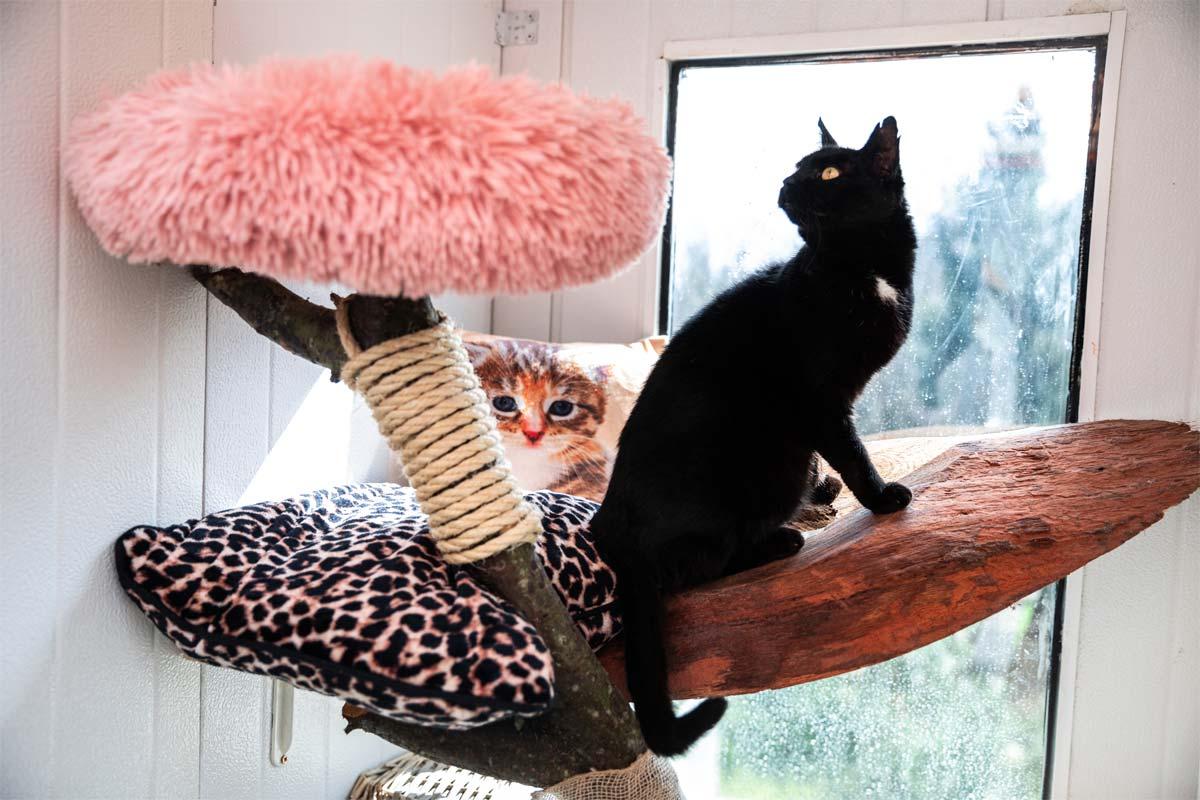 Udoban smještaj za vašu macu