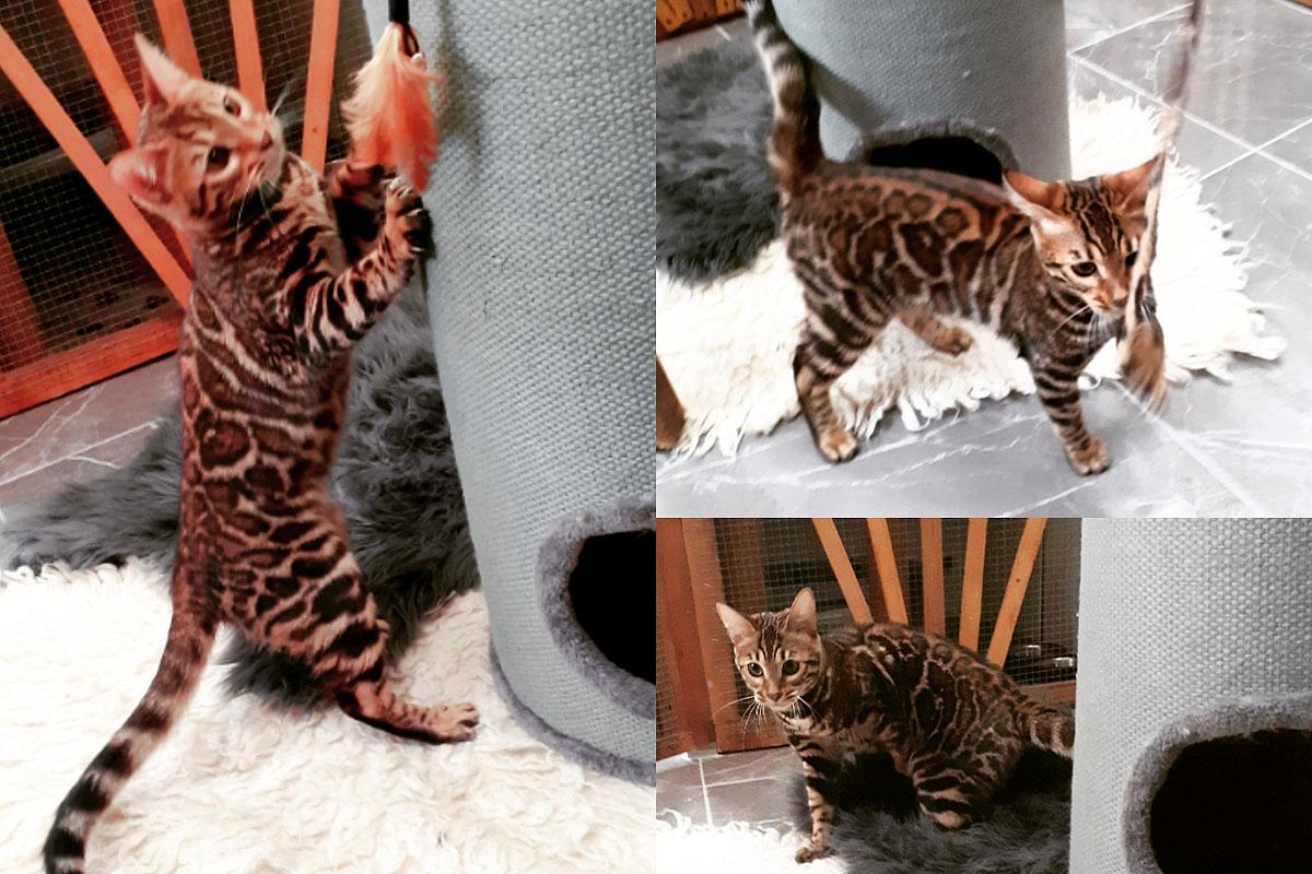 Čuvanje mačaka u apartmanskom smještaju uz igru i penjalice
