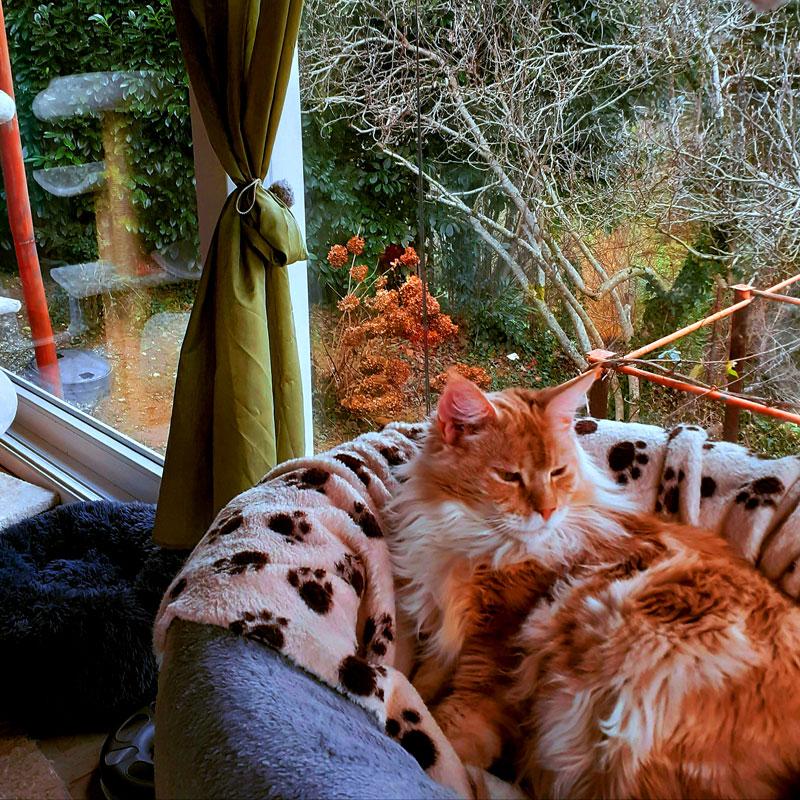 Opušteno uživanje mačaka s pogledom na zelenilo